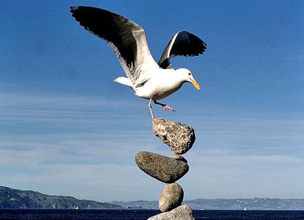 balanced-bird.jpg